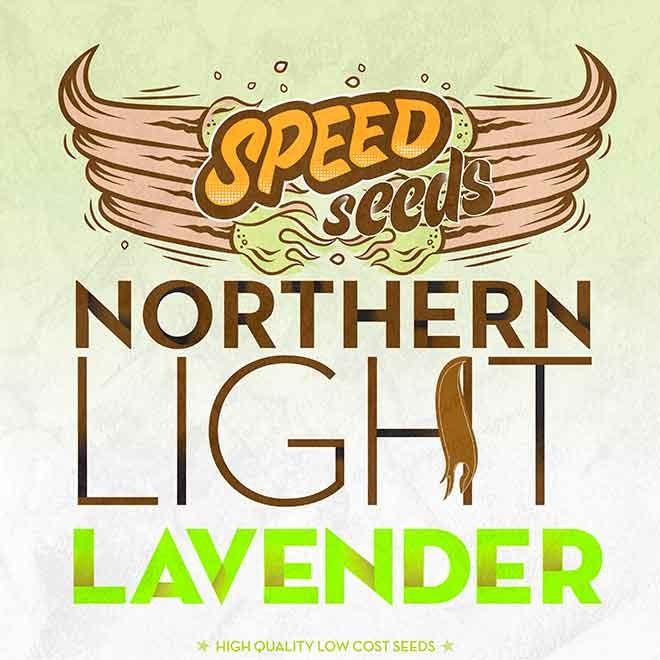 NORTHERN LIGHT X LAVENDER - Speed Seeds - Seed Banks