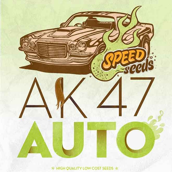 AK 47 AUTO (SPEED SEEDS) - Speed Seeds - Seed Banks