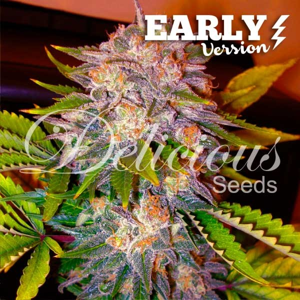 CARAMELO EARLY VERSION - Delicious Seeds - Seed Banks