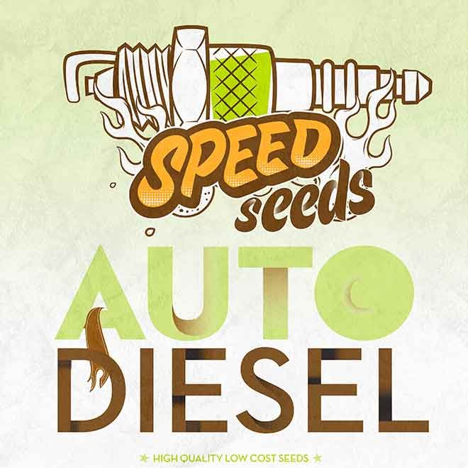 DIESEL AUTO (SPEED SEEDS) - Speed Seeds - Seed Banks