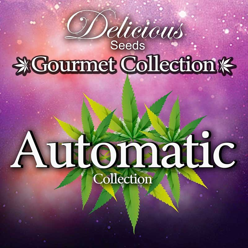 Gourmet Collection - Automatic Strains - Delicious Seeds - Seed Banks