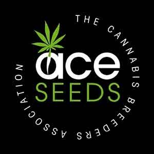Green Haze Regular - 5 seeds - Ace Seeds - Seed Banks