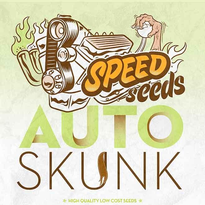 SKUNK AUTO - Speed Seeds - Seed Banks