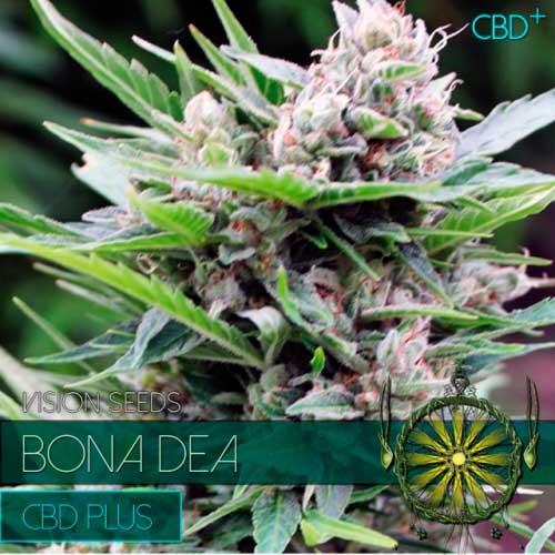 BONA DEA CBD+ - Vision Seeds - Seed Banks