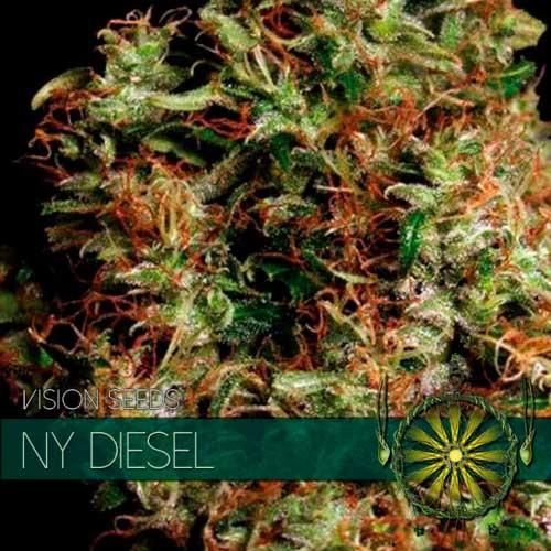 NY DIESEL - Vision Seeds - Seed Banks