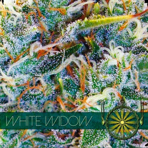 WHITE WIDOW - Vision Seeds - Seed Banks