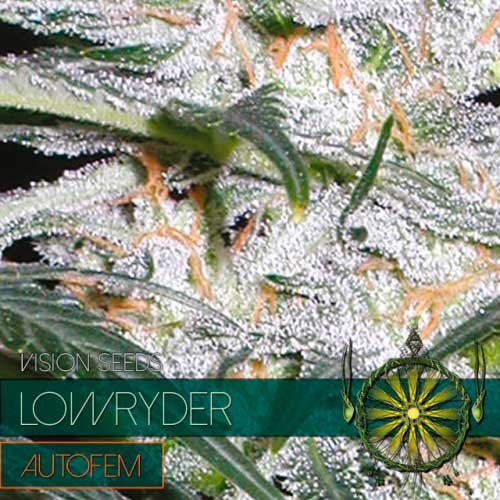 LOWRYDER AUTO - Vision Seeds - Seed Banks