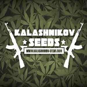 Power Russian  - Kalashnikov - Seed Banks