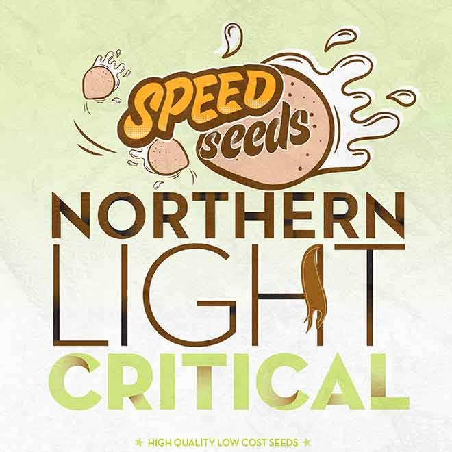 NORTHERN LIGHT X CRITICAL - Speed Seeds - Seed Banks