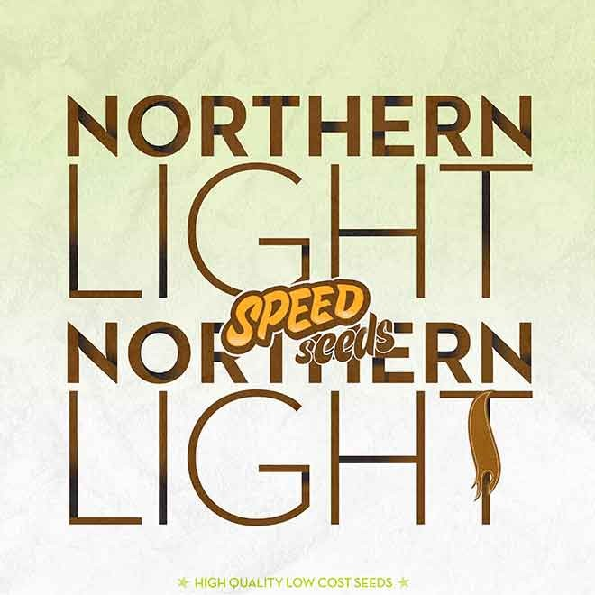 NORTHERN LIGHT X NORTHERN LIGHT - Speed Seeds - Seed Banks