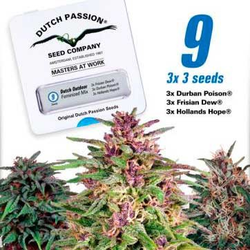 Dutch Outdoor Mix - Dutch Passion - Seed Banks