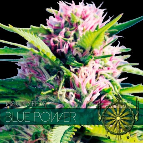 BLUE POWER - Vision Seeds - Seed Banks