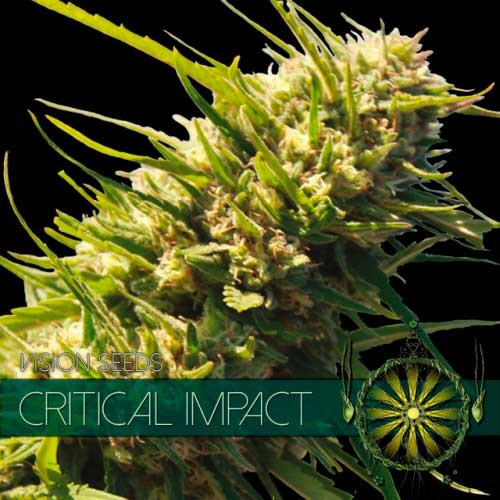 CRITICAL IMPACT - Vision Seeds - Seed Banks