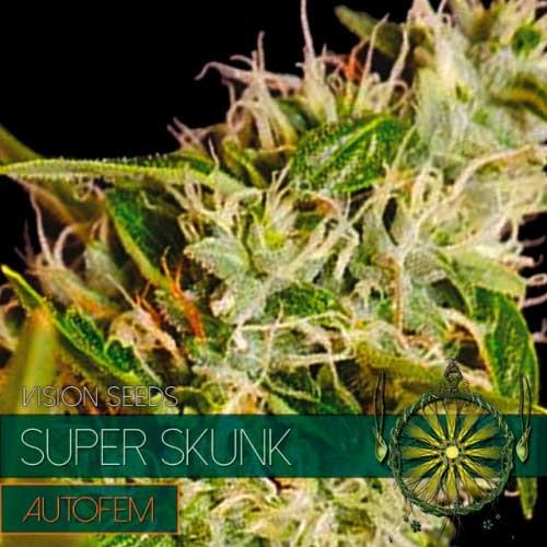 SUPER SKUNK AUTO - Vision Seeds - Seed Banks