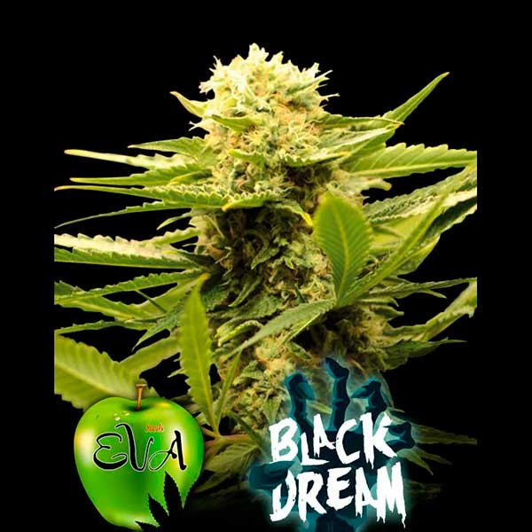 BLACK DREAM - Eva Seeds - Seed Banks