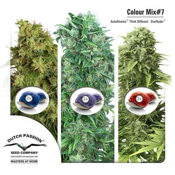 Colour Mix 7 (AutoFem) - Dutch Passion - Seed Banks