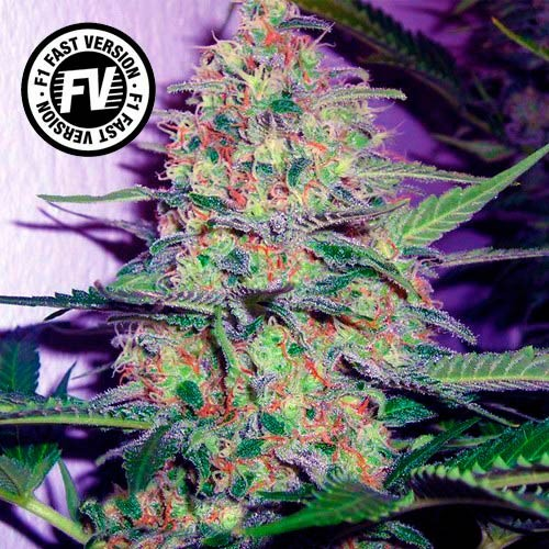 Green Poison Fast Version - Sweet Seeds - Seed Banks