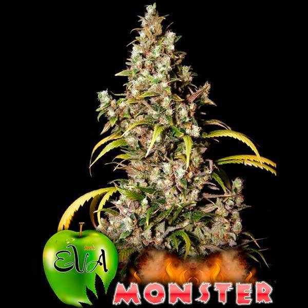 MONSTER - Eva Seeds - Seed Banks