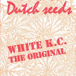 White K.C. - 5 seeds - Samsara Seeds - KC Brains