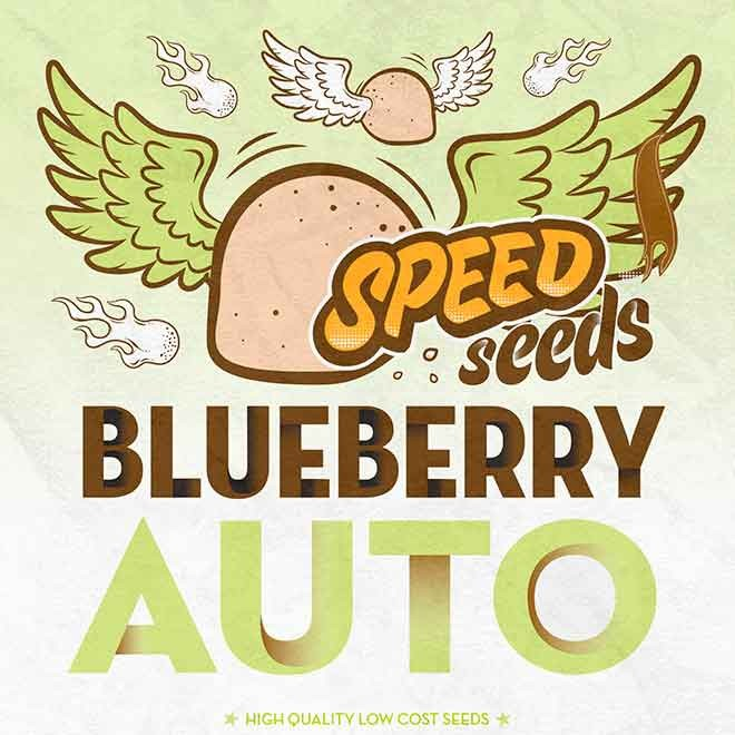 BLUEBERRY AUTO (SPEED SEEDS) - Speed Seeds - Seed Banks