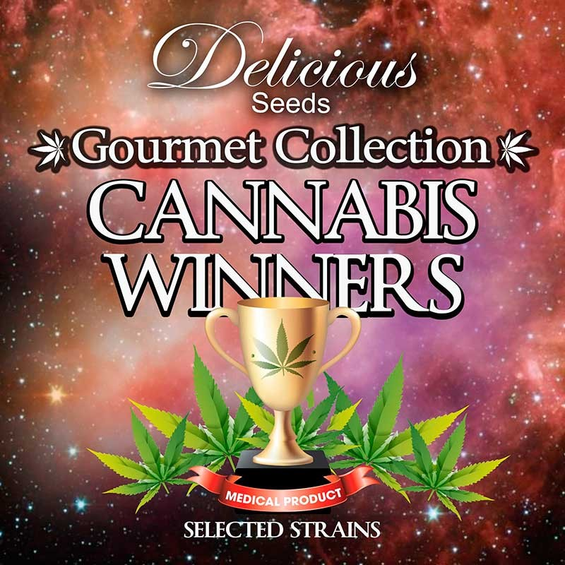 Gourmet Collection - Cannabis Winner Strains - Delicious Seeds - Seed Banks