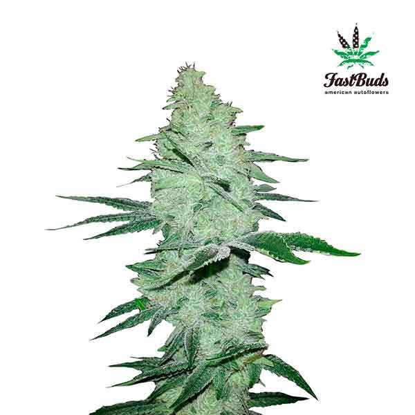 SIX SHOOTER - FastBuds - Seed Banks