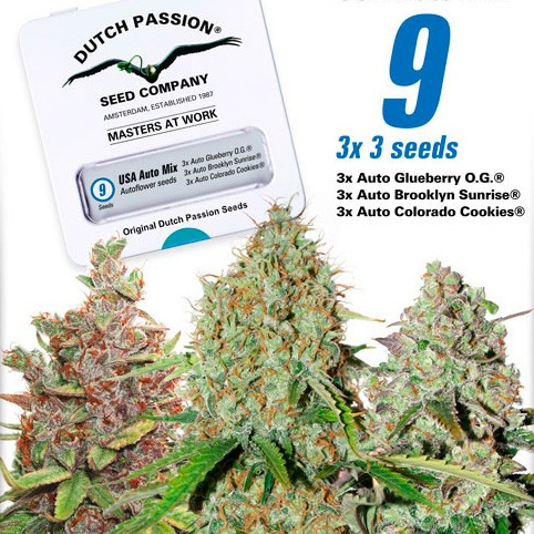 USA Autoflower Mix - Dutch Passion - Seed Banks