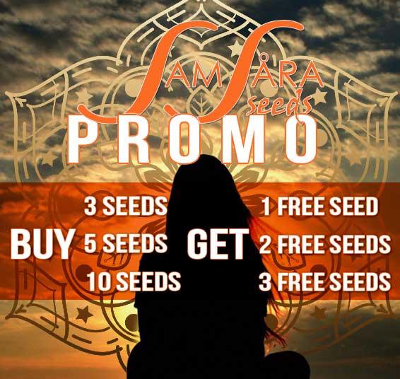 Samsara Promo